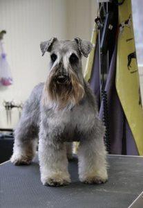 """Salon pielęgnacji psów """"Mini dog"""""""