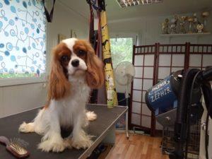 Salon Pielęgnacji Psów Mini Dog